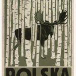 Polska-brzozy_width400_3
